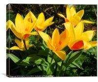 Cheerful Tulips, Canvas Print