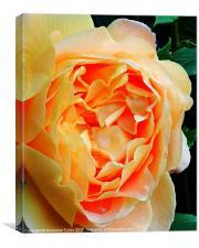 Golden Beauty, Canvas Print