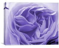 Raindrops on Blue Rose, Canvas Print