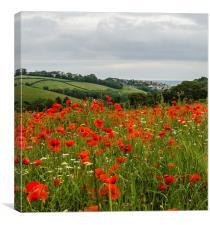 Poppy view