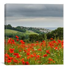Poppy view 2