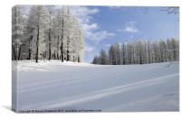 Tree lined piste, Canvas Print