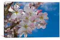 Pink Blossom blue sky, Canvas Print