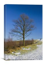 Lone tree blue sky, Canvas Print