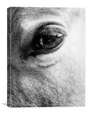 Look into my eye..., Canvas Print
