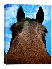 Horsing Around..., Canvas Print