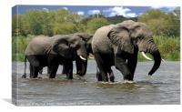 Malawi Elephants, Canvas Print