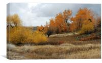 Fall in Montana, Canvas Print