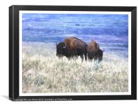 American bison, Canvas Print