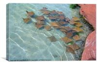 Atlantis stingrays, Canvas Print