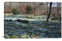 Bed of snowdrops, Canvas Print