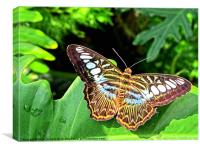 Butterfly on Green Leaf, Canvas Print