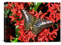 Butterfly of Red Flowers, Canvas Print