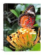 Butterfly on a Blossom, Canvas Print