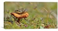 Fungi Frog, Canvas Print