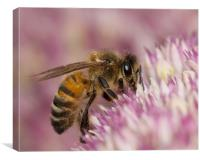Summer Bee, Canvas Print