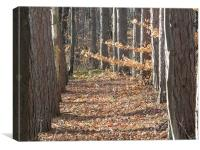 Pine Trees in a Row, Canvas Print
