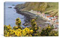 Yellow Over Crovie, Canvas Print