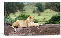 Masai Mara Lion, Canvas Print