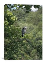 Perched Blue Heron