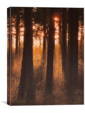 Twigs, Canvas Print