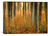 Into the Sunlight, Canvas Print