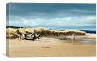 Tentsmuir Dunes