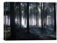 Forest Fire Smoking Aftermath, Canvas Print