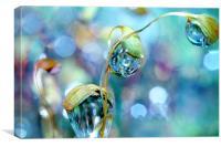 Rainbow Moss Drops, Canvas Print