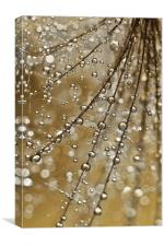 Golden Fairy Shower, Canvas Print