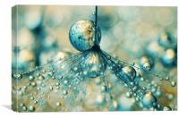 Dandy Sprinkles, Canvas Print