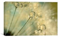 Dandy Drops & Sparkles, Canvas Print