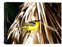 bird of passion, Canvas Print
