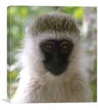 Monkey in the Masai Mara Kenya, Canvas Print