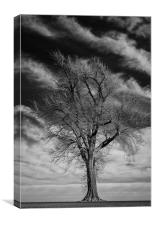 Old Dead Tree, Canvas Print