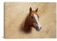 Portrait of a Mare, Canvas Print