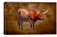 Lone Longhorn, Canvas Print