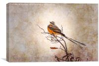Scissor-Tailed Flycatcher , Canvas Print
