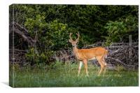 Deer, Canvas Print