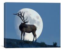 Elk And Moon