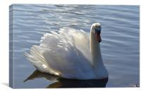 Swan in Richmond, Canvas Print