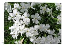 White Flowers in Grass, Canvas Print