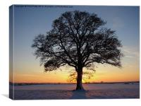 Oak Tree, Canvas Print