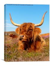 Highland Cattle, Highland Cow, Scotland, Canvas Print
