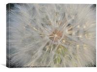 floral fireworks, Canvas Print