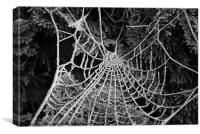 beaded web, Canvas Print