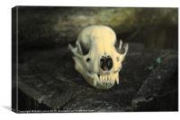 skull, Canvas Print