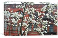 spring in the city, Canvas Print