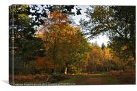 Autumn in the New Forest, Canvas Print