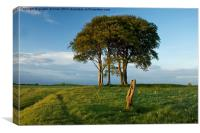 A Striking Tree on Roundway Hill